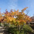 Photos: 昭和記念公園【日本庭園:清池軒周辺の紅葉】2