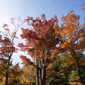 Photos: 昭和記念公園【日本庭園:清池軒周辺の紅葉】4