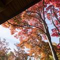 昭和記念公園【日本庭園:清池軒周辺の紅葉】8