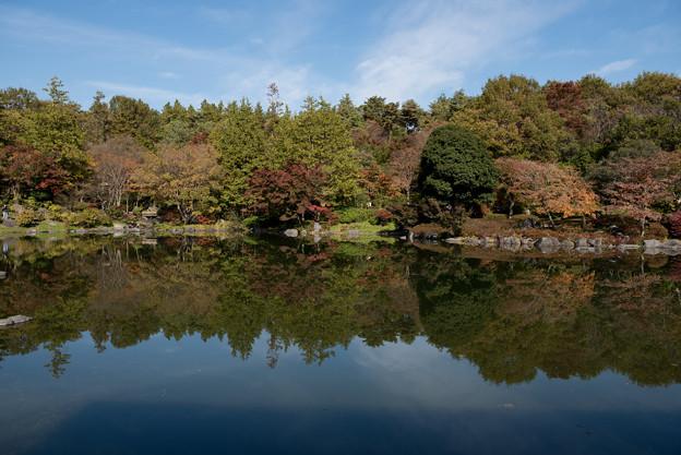 昭和記念公園【日本庭園:池と紅葉】4