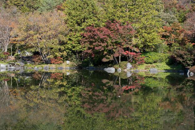 昭和記念公園【日本庭園:池と紅葉】5