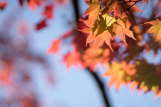 昭和記念公園【日本庭園:紅葉のピックアップ】7