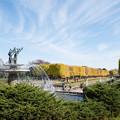 写真: 昭和記念公園【カナールのイチョウ】7