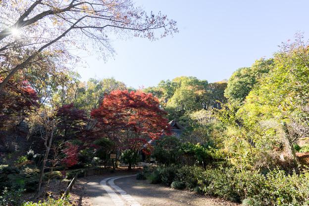 薬師池公園【旧荻野家住宅の紅葉】3