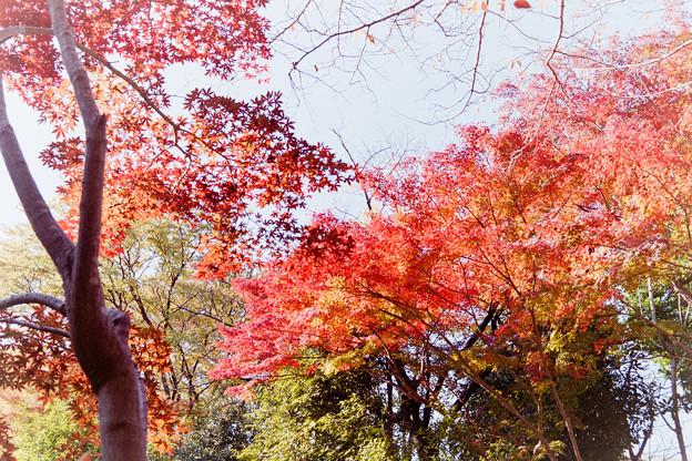 【ささぶねの小路沿いの紅葉】4