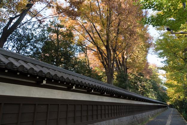 小石川後楽園【塀の外から見た紅葉】1