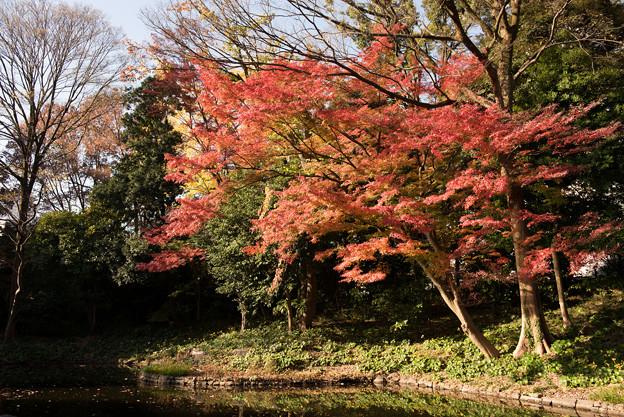 小石川後楽園【西湖の堤近辺の紅葉】