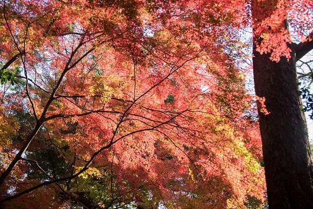 小石川後楽園【小廬山近辺の紅葉】3