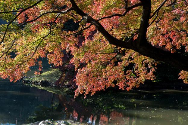 小石川後楽園【沢渡り近辺の紅葉】2