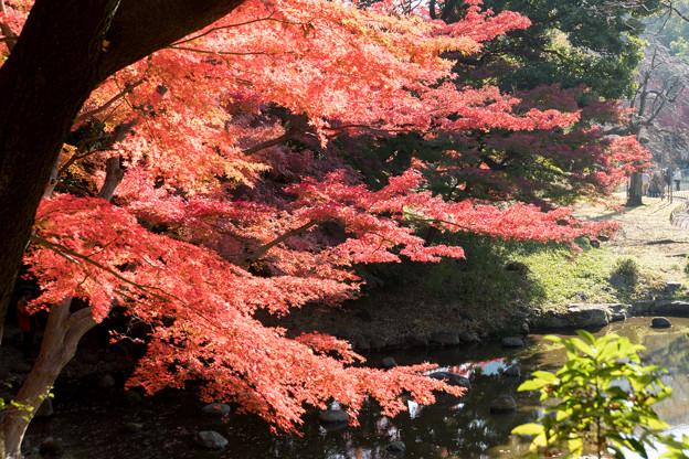 小石川後楽園【異形灯篭近辺の紅葉】5