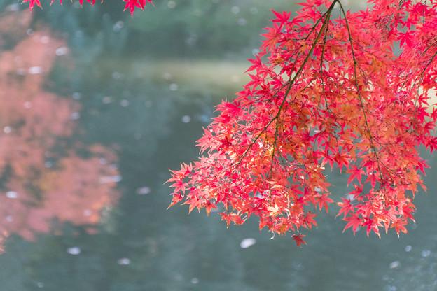 小石川後楽園【蓬莱島近辺の紅葉】4