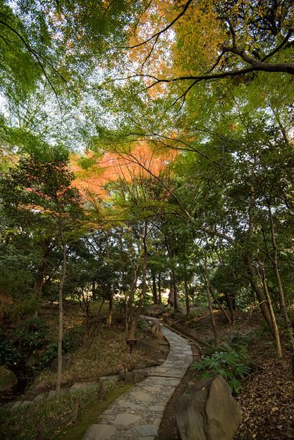 小石川後楽園【内庭近辺の紅葉】1