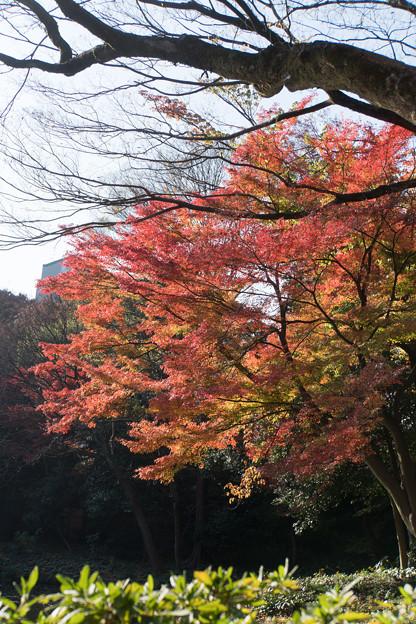 小石川後楽園【松原近辺の紅葉】2