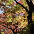 六義園【水香江の紅葉】1