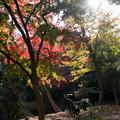 六義園【水香江の紅葉】3
