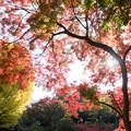 六義園【水香江の紅葉】4