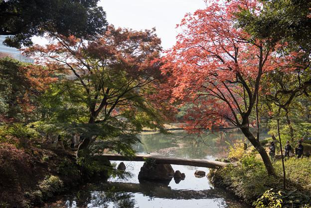 六義園【渡月橋の紅葉】