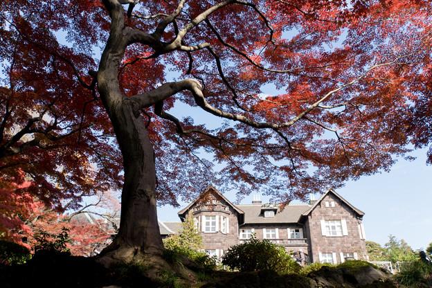 【旧古河庭園の紅葉】2