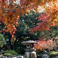 【旧古河庭園の紅葉】4