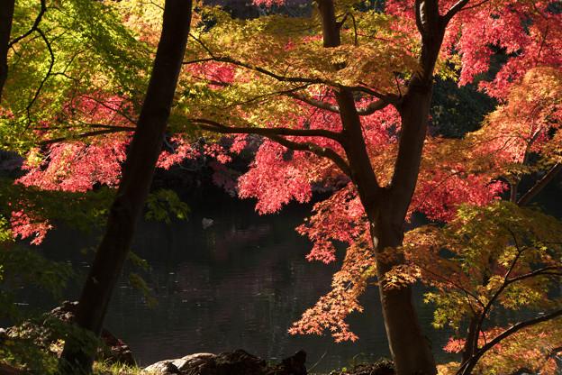 新宿御苑【下の池の紅葉】2