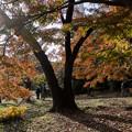 新宿御苑【上の池の紅葉】2