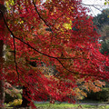 Photos: 新宿御苑【上の池の紅葉】3