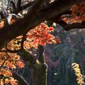 Photos: 新宿御苑【上の池の紅葉】5