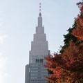 Photos: 新宿御苑【音羽亭の紅葉】1