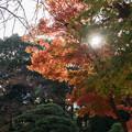 Photos: 新宿御苑【音羽亭の紅葉】2