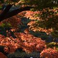 Photos: 新宿御苑【音羽亭の紅葉】3