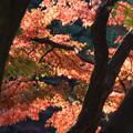 Photos: 新宿御苑【音羽亭の紅葉】4