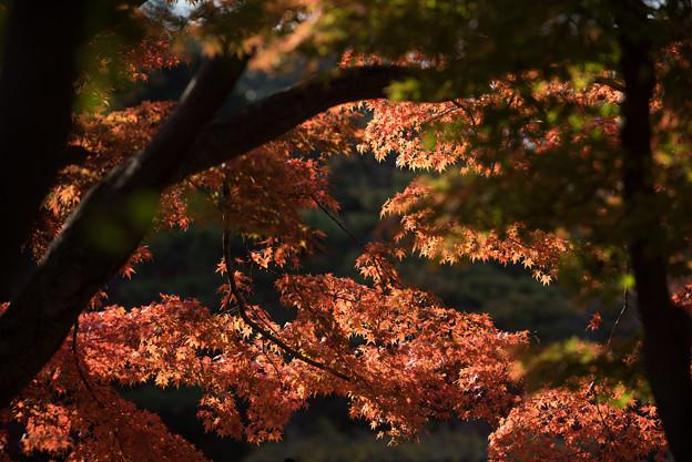 新宿御苑【翔天亭の紅葉】2