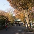 Photos: 【九品仏浄真寺の紅葉】1