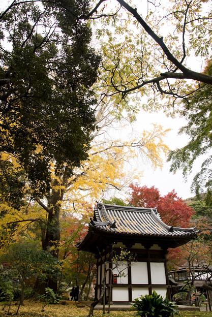 三渓園【旧天瑞寺寿塔覆堂あたりの紅葉】