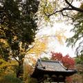 Photos: 三渓園【旧天瑞寺寿塔覆堂あたりの紅葉】
