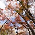 神代植物公園【かえで園の紅葉】2-3