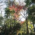 新宿御苑【桜園地あたりの紅葉】