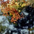 Photos: 新宿御苑【もみじ山の紅葉】9