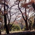 Photos: 新宿御苑【芝生広場あたりの紅葉】1