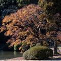 Photos: 新宿御苑【旧御涼亭あたりの紅葉】2