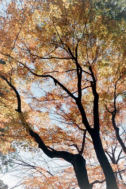 新宿御苑【楽羽亭あたりの紅葉】3