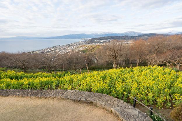 吾妻山公園【菜の花畑:Nikkor 16-35mm f4】5
