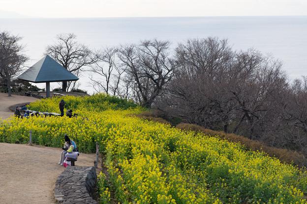 吾妻山公園【菜の花畑:Planar 85mm f1.4】1