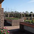 花菜ガーデン【チャペックの家と庭】4
