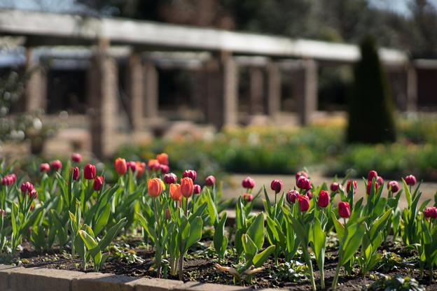 花菜ガーデン【チャペックの家と庭】5