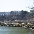 Photos: 薬師池公園【満開の梅園】3