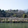 Photos: 薬師池公園【満開の梅園】4