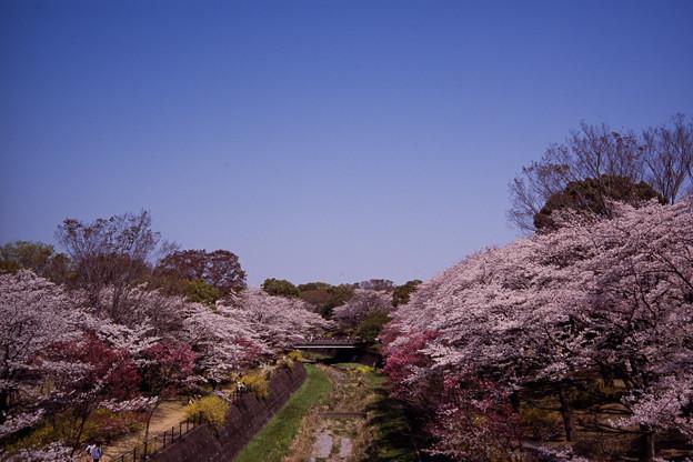 昭和記念公園【朝掘川周辺の眺め】銀塩ポジ_2