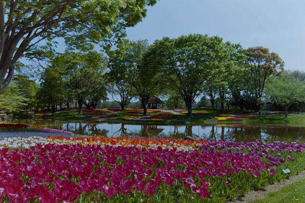昭和記念公園【渓流広場の眺め】15銀塩