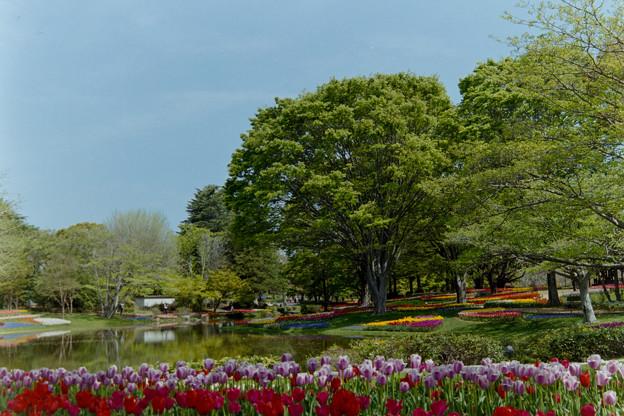 昭和記念公園【渓流広場の眺め】16銀塩